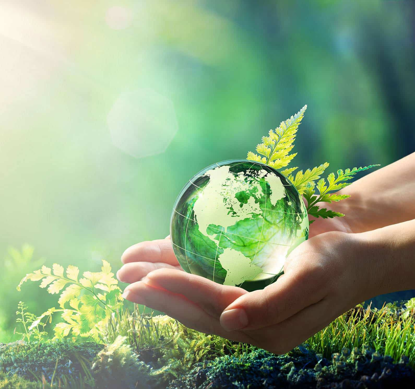 Generating Wealth Through Sustainable Resources